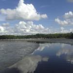 Everglades Eco Tours