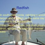 Click to view the Redfish Workshop Presentation
